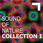 Sound of the nature – collection 1 by Various Artists