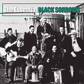 The Essential by The Black Sorrows