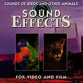 Sounds of Birds and Other Animals by Sound Effects