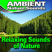 Relaxing Sounds of Nature (Nature Sounds) by Ambient Nature Sounds