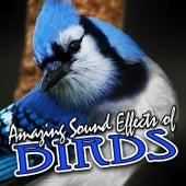 Amazing Sound Effects of Birds by Sound Fx