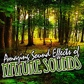 Amazing Sound Effects of Nature Sounds by Sound Fx