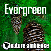 Evergreen (Music with Nature Sounds) by Nature Ambience