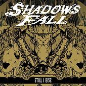 Still I Rise by Shadows Fall