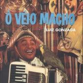 Ô Véio Macho by Luiz Gonzaga