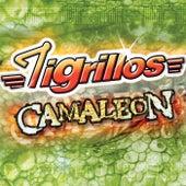 Camaleón by Los Tigrillos