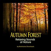Nature Sounds - Autumn Forest Relaxing Sounds of Nature by Meditation Downloads