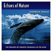 Humpback Whales by Echoes of Nature