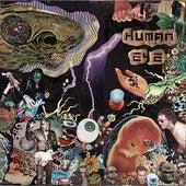 Fragments of the Universe Nurse by Human Eye (Garage Rock)