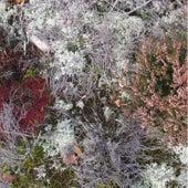 Mycorrhizae Realm by Fursaxa