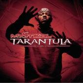 Tarantula by Mystikal