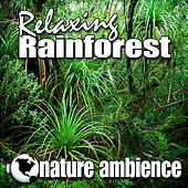 Relaxing Rainforest (Nature Sounds) by Nature Ambience