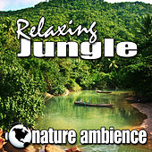Relaxing Jungle (Nature Sounds) by Nature Ambience