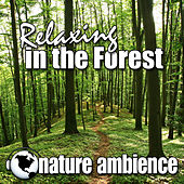 Relaxing in the Forest (Nature Sounds) by Nature Ambience