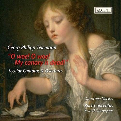 Telemann: Overtures - Du angenehmer Weiberorden - Trauer-Music eines kunsterfahrenen by Various Artists