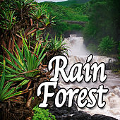Rain Forest (Nature Sounds) by Natural Sounds