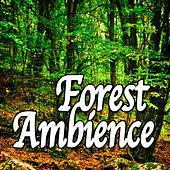 Forest Ambience (Nature Sounds) by Natural Sounds