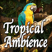 Tropical Ambience (Nature Sounds) by Natural Sounds