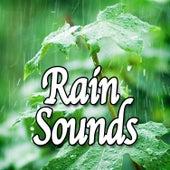 Rain Sounds (Nature Sounds) by Natural Sounds