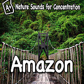 Nature Sounds for Concentration - Amazon by Study Music