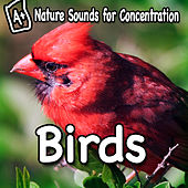 Nature Sounds for Concentration - Birds by Study Music