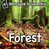 Nature Sounds for Concentration - Forest by Study Music
