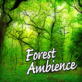 Forest Ambience (Nature Sounds only) by The Atmosphere Collection