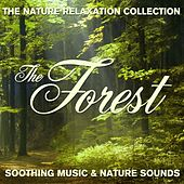 The Nature Relaxation Collection - The Forest / Soothing Music and Nature Sounds by Various Artists