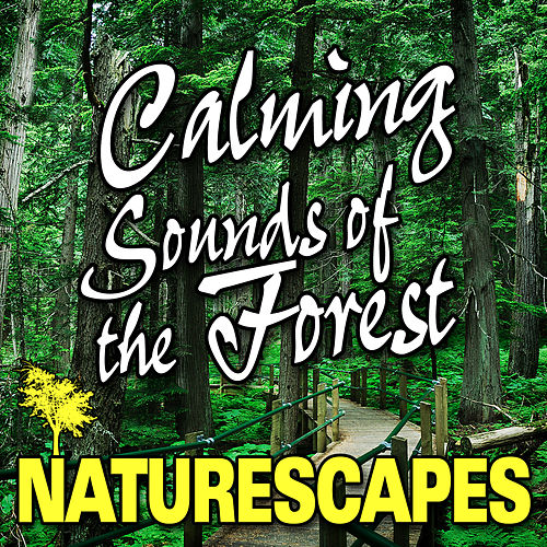 Calming Sounds of the Forest (Nature Sounds) by Naturescape