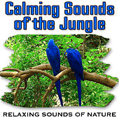 Calming Sounds of the Jungle (Nature Sounds) by Relaxing Sounds of Nature