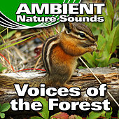 Voices of the Forest (Nature Sounds) by Ambient Nature Sounds