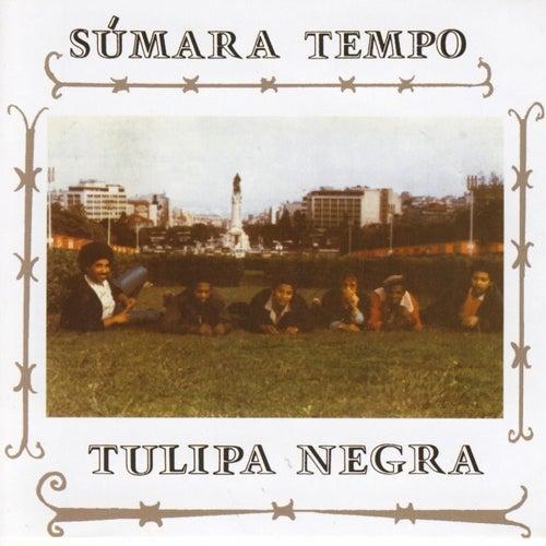 Sumara Tempo by Tulipa Negra