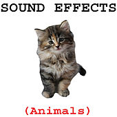 Animal Sound Effects by Sound Effects