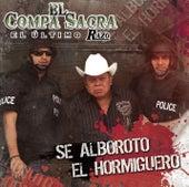 Se Alborotó El Hormiguero by El Compa Sacra