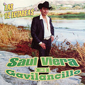 El Gavilancillo by Saul Viera