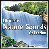 Ultimate Nature Sounds Collection: for Healing, Yoga, Spa by Natural White Noise: Music for Meditation, Relaxation, Sleep, Massage Therapy