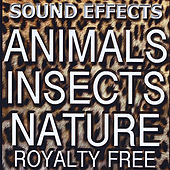 Animal Sound FX, Insects and Nature by Sound Effects Royalty Free