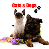 Cats & Dogs by Cats and Dogs