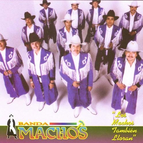 Los machos también lloran by Banda Machos
