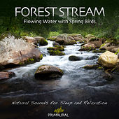 Forest Stream - Flowing Water With Spring Birds by Tim Nielsen