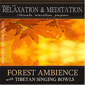 Forest Ambience With Tibetan Singing Bowls: Music for Relaxation and Meditation - Single by Music For Relaxation