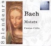 Bach: Motets by Cantus Cölln