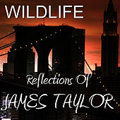 Reflections of James Taylor by Wild Life