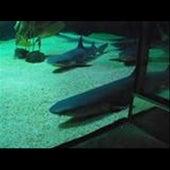Crank Dat Shark Attack - Single by Speedy
