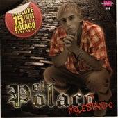 El polaco - Molestando by Polaco