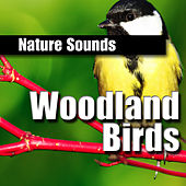Woodland Birds by Nature Sounds BLOCKED