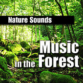 Music in the Forest (Music and Nature Sound) by Nature Sounds BLOCKED