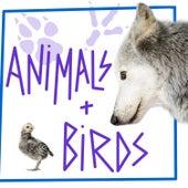 Animals & Birds by Sound Effects