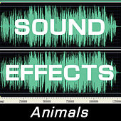 Sound Effects: Animals by Sound Effects
