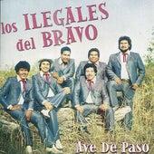 Ave de Paso by Los Ilegales del Bravo